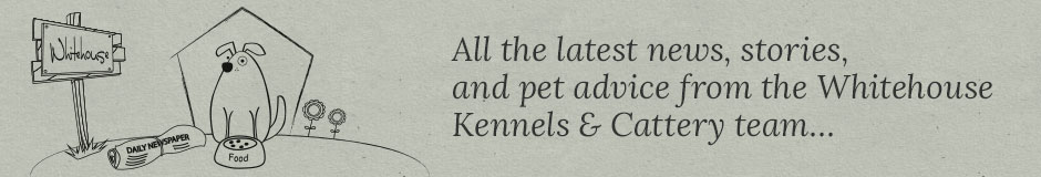 Kennels & Cattery, Somerset