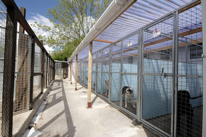 Gallery our facilities whitehouse kennels cattery for What is dog boarding