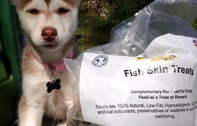 Fishy Woofas Shortlisted for Pet Industry Award