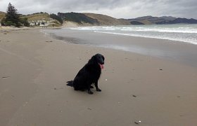 Maddie enjoying the beach in New Zealand